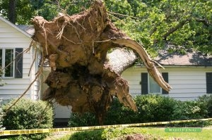 Tree Collapse
